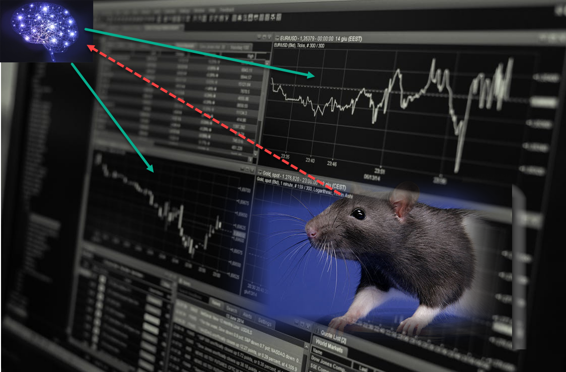 Rat_Markets